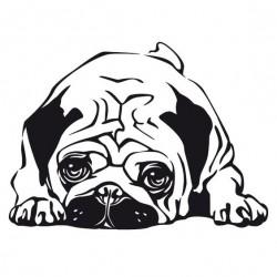 Куче порода мопс,...